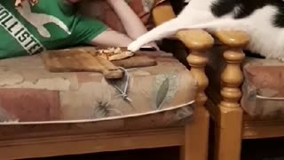 Cat Tries to Steal a Slice of Pizza