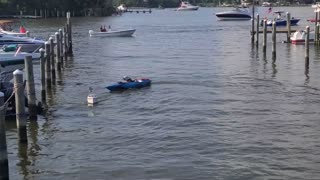 Dog Enjoying Remote Control Boat Ride on the 4th