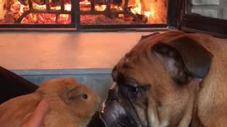 The Love is Real - Furry Family - Video