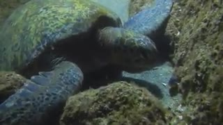 What turtles do late in the night - Video