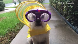 White dog sidewalk windshield wiper glasses - Video