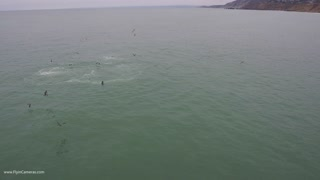 Pacifica Humpback Whales - Video