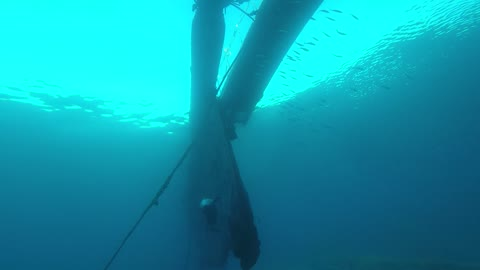 Dolphin swimming with divers in the Red Sea, Eilat Israel 2