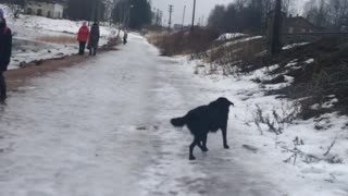 Man Rescued Dog from Ice - Video