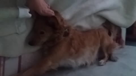 Pooch Enjoys Endless Massages From Owner While Cuddling In Bed