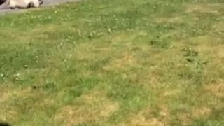 sweet kitten try to catch bird  - Video