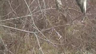 Puppy finds a pike in tree