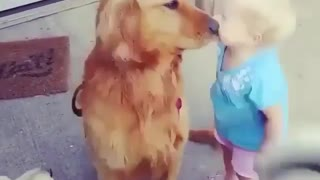 little kid play with dog