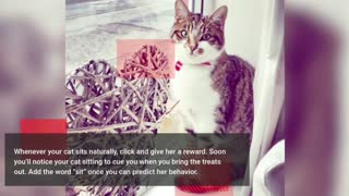 How to train your cat, 7 essential commands your cat can really learn