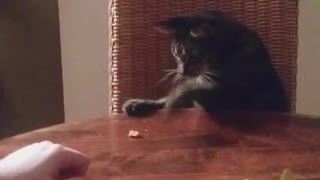 Brown cat paws at treat on wooden table - Video