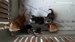 Kittens playing with one another in basket  - Video