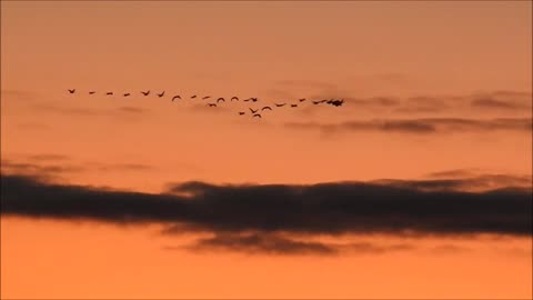 Canadian Geese in a Colorful Sky.