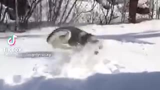 I play with my dog in snow