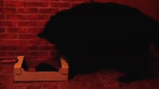 Dog Meets a Hedgehog - Video