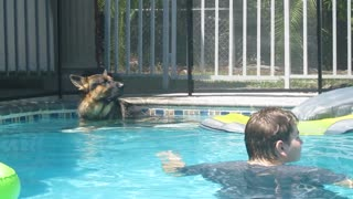 German Shepherd naps on pool float; Golden Retriever treads water