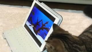 Two Cats with A laptop on The Bed