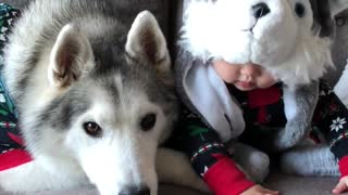 Baby and husky have adorable matching outfits