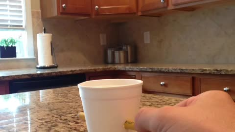 The self-healing styrofoam cup
