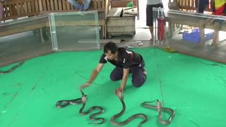 Snake charmer gets up close and personal