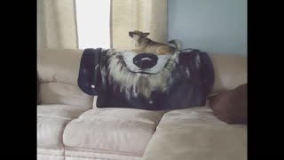Jealous Dog Pushes Puppy Off Couch - Video