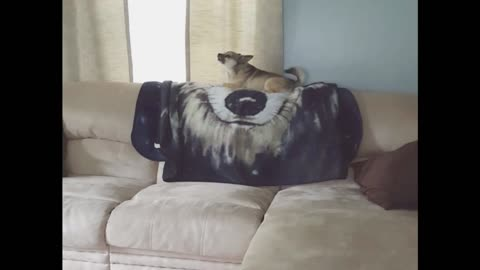 Jealous Dog Pushes Puppy Off Couch