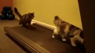 Funny Kitties Working Out On Treadmill
