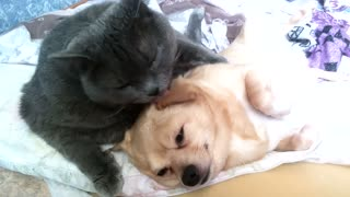 A cat love to lick your dog!  - Video