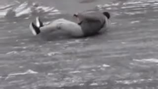 Green jacket slides across ice road falls hits head - Video