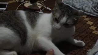 Fighting with a cat