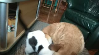 Black and white dog attacks brown dog