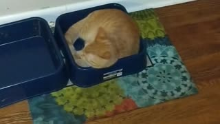 Cat decides to chill out in dog's water bowl