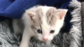 How to take care of your born kittie - Video