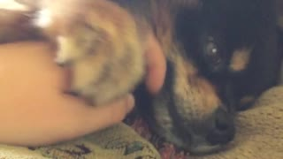 Fluffy black puppy doesnt let owner move hand away - Video