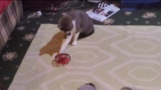 Kitty Gomez messes with a tiny drone