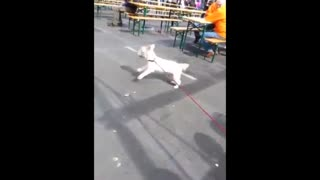 17-year-old deaf dog rocks out at concert - Video