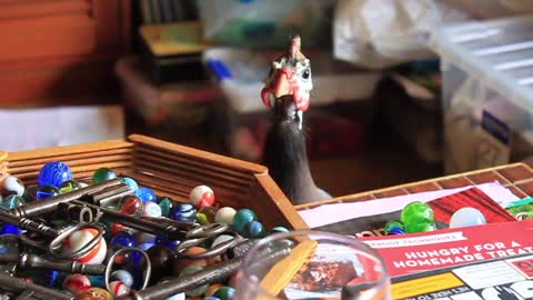 Pet Guinea Fowl Inspecting Marble & Key Collection