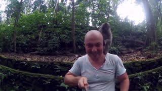 Monkeys attack - Video