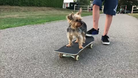 Cute dog's first time skateboarding