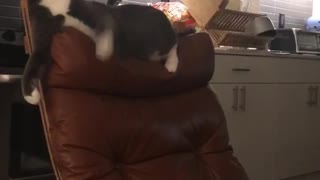 Cat falls off chair