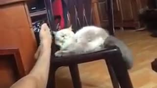 Funny Cats Compilation 2016 - Kittens playing with host to bite a her leg - Video