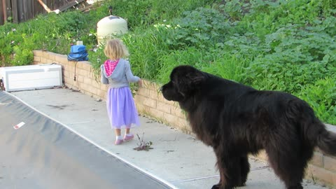 Vigilant Dog Protects His Young Human Near The Pool