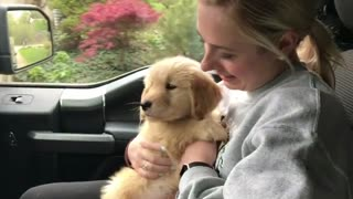 Golden Retriever's First Ever Car Ride - Video