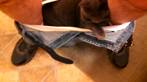 Cat Refuses To Crawl Out Of Man's Underwear While On The Toilet