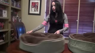 How to make the best bed ever for your pets - Video
