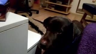 Dog hinting what he really desire - Video