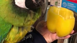 Cooking with birds  - Video