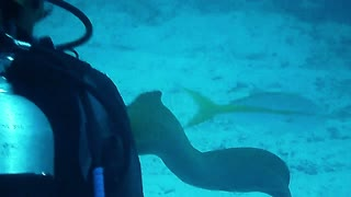 Face To Face With A Huge Moray Eel