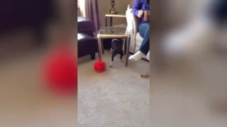 Dogs Also Cant See The Glass? - Video