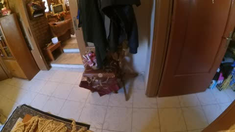 My dog know to open a door