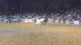 Dan James And His Incredible Horses Show Everyone What True Horsemanship Is All About - Video
